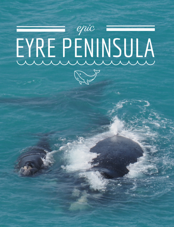 Epic Eyre Peninsula: Everything you need to see on your EP road trip!